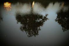 Το δέντρο μέσα στο νερό.