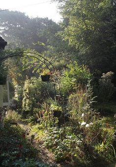 Garden Sept 13 002