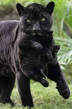 Mom carrying her baby to safety.....