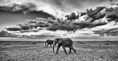 elephants under beautiful sky