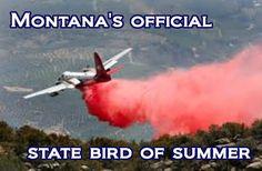 Montana's official state bird of summer