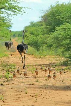 Familia numerosa haciendo una carrera