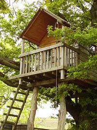I will take on this project this summer and hit two birds with one project. Give the kids a place of their own while dealing with that patch of ground under the big pine tree were no grass can grow. How to build a tree house for your kids Building A Treehouse, Build A Playhouse, Treehouse Ideas, Playhouse Ideas, Outdoor Spaces, Outdoor Living, Tree Camping, Tree House Plans, Woodland House