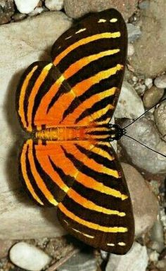 Weird Insects, Flying Insects, Glass Butterfly, Butterfly Kisses, Beautiful Bugs, Beautiful Butterflies, Beautiful Creatures, Animals Beautiful, Butterfly Species