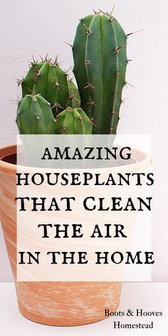 15 amazing houseplants that help to clean the air in the home. 15 amazing houseplants that help to clean the air in the home. Indoor Gardening Supplies, Gardening Tips, Urban Gardening, Container Gardening, Herbal Remedies, Natural Remedies, Diarrhea Remedies, Bathroom Plants, Natural Cleaning Products