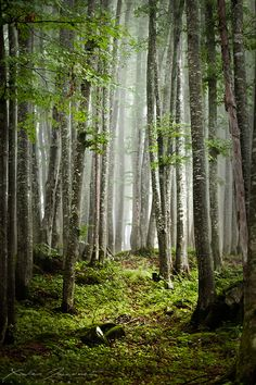 Enchanted woods - Rainy forest in the area of Faverges, in French Alps.