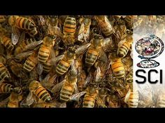 Tackling The Global Honey Bee Crisis - YouTube