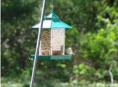 Bird Feeder Supplies