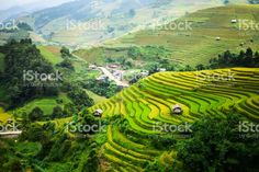 Rice fields on terraced at Mu Cang Chai royalty-free stock photo