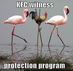 This is for all the roosters who attacked their owners when they weren't looking.  I understand the hooman looked like a threat to your ladies.  I won't tell them you went to live in Florida with the pink frou frou birds.