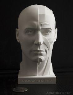 Анатомия Следующий магазин - MALE КОЖИ / ТОПОГРАФИЯ ГОЛОВА 3D модель PRINT