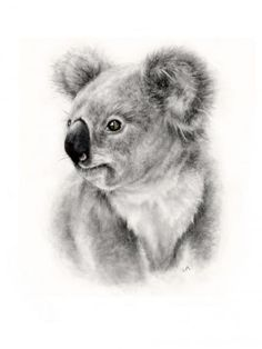 """""""It is the profound joy felt by all who observe the natural world with a sustained and devoted intensity"""" . Baby Animal Drawings, Animal Sketches, Drawing Sketches, Realistic Drawings, Cute Drawings, Koala Tattoo, Amazing Animals, Scratchboard Art, Australia Animals"""