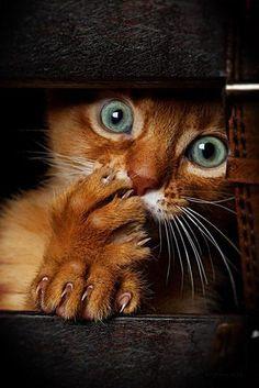 Gato, Adorável Independência...