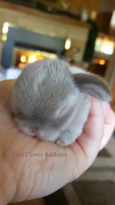 These little bunnies are guaranteed to make you squeal! So precious and delicate! @ cute animals # bunnies # cute bunnies photos # cute animal photos cutest baby animals 19 Super Tiny Bunnies That Will Melt The Frost Off Your Heart Tiny Bunny, Cute Baby Bunnies, Cute Babies, Cutest Bunnies, Bunny Rabbit, Rabbit Head, Baby Animals Pictures, Cute Animal Photos, Animals And Pets