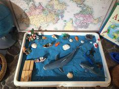 Ocean - sea - shark - boat - sensory area
