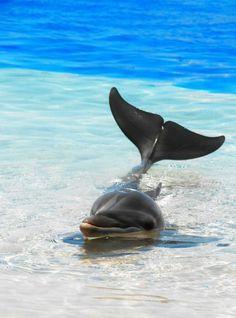 Dolphin... my favorite animal. So beautiful