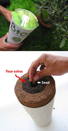 Biodegradable urn turns  you into a tree.  I want this done to me when I die.  A Maple tree.
