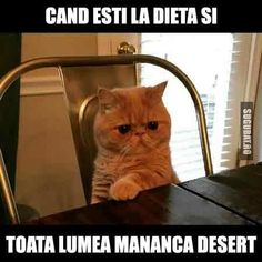 Cat Stands on His Hind Paws and Stares When He Find Something Suspicious Funny Animal Clips, Funny Animals, Funny Picture Quotes, Funny Pictures, Funny Memes, Jokes, Cat Memes, Cat Stands, Ginger Cats