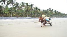 En Portete encontrarás muchas, muchas palmeras. Foto: Sofía Bermúdez.