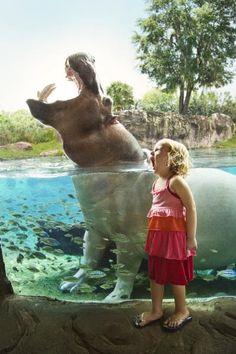 Busch Gardens Tampa - Theme Parks in Orlando, Florida