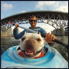 A GoPro camera is easily mounted to the bow of a sea kayak for this dramatic, in-your-face, happy picture of a rescued pup enjoying his family of two.  GoPros are incredibly versatile tools that can really enhance the virality of your adoptable dog (or cat) postings.