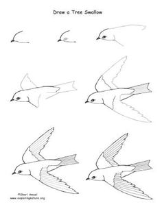 Easy draw bird how to draw a tree swallow step by step art kids drawing lesson . Flying Bird Drawing, Bird Drawings, Animal Drawings, Drawing Sketches, Pencil Drawings, Drawing Birds Easy, How To Draw Birds, How To Draw Trees, Sketching