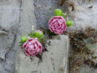 """Gallery.ru / ArtKaterina - Альбом """"Пионы и розы из полимерной глины Fimo"""""""