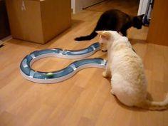Catit Senses speed circuit - my cat loves this toy.