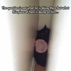the ham.