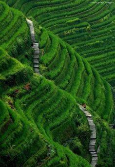 Stairway to Heaven. / Escalier vers le paradis. / Longsheng, Guilin County. / China, Chine.