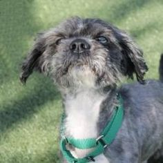 Joseph Wally is an adoptable Shih Tzu Dog in Salem, MA. 'Hi, my name is Joseph Wally and I'm a real doll. 'Hi, my name is Joseph Wally and I'm a real doll. I am very sweet and very friendly and when I...