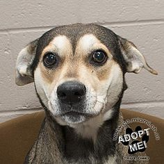 URGENT! I am a resident at a full, kill shelter in Troy, Ohio - Terrier (Unknown Type, Medium). Meet Maggie, a for adoption. https://www.adoptapet.com/pet/19937516-troy-ohio-terrier-unknown-type-medium-mix