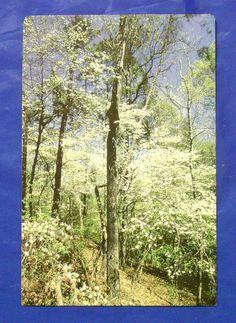 Lufkin Texas Davy Crockett National Forests Dogwood Tree