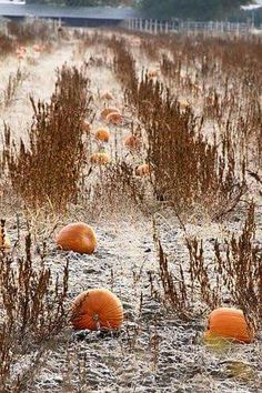Frost on the Pumpkins ♡