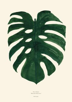 "Plant Series Monstera Deliciosa This is the first poster in by Garmi's Plant Series. The Plant Series is an ongoing poster series of various plants, leafs and flora. 19.75"" x 27.5"" Green on Cream Pape"
