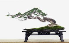 Welcome Bonsai Enthusiasts of All Levels! – Albuquerque Bonsai Club Source by segalos . Ikebana, Bonsai Trees For Sale, Bonsai Tree Types, Mini Bonsai, Indoor Bonsai, Plantas Bonsai, Juniper Bonsai, Bonsai Styles, Miniature Trees