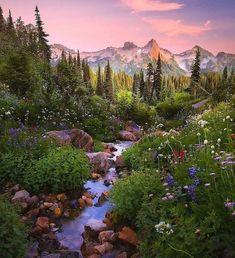 Mount Rainier National Park, Yosemite National Park, Image Nature, Nature Aesthetic, Nature Wallpaper, Photo Wallpaper, Nature Pictures, Amazing Nature, Pretty Pictures