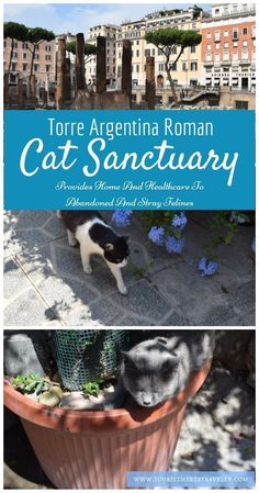 If you are visiting Rome the Torre Argentina Roman Cat Sanctuary is the perfect place to visit in Rome with the kids.  The sanctuary provides healthcare to abandoned and stray cats. Don't miss this destination.
