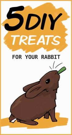 65 diy treats PINTEREST Mini Lop Bunnies, Pet Bunny Rabbits, Pet Rabbit, Baby Bunnies, Rabbit Farm, House Rabbit, Rabbit Toys, Bunny Cages, Rabbit Cages