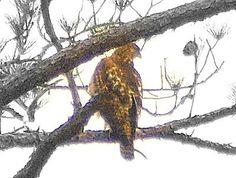 Caught IN tree