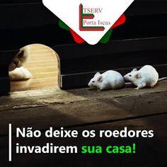 Blog do rato - Associação Brasileira de Franchising: NÃO DEIXE OS ROEDORES INVADIREM SUA CASA!!