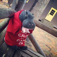 "Harvey thinks it's a ""hang out in the West Shore Gazebo"" kind of day! #lentoutside #skylake14"