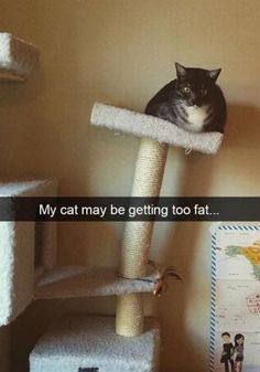 23 Fat Cat Memes #funny #picture