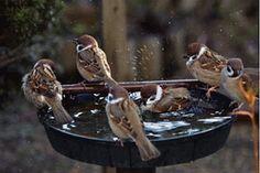 Fotó: Aranyosi Ervin: Adj hálát reggel… Adj hálát reggel az ébredő világnak, – örökbe kaptál egy újabb, szép napot. Engedd az érzést áradni szívedben, szeresd hogy itt vagy, e föld az otthonod. Hallgasd a dalt, mely apró madaraknak hálával teli, reggeli éneke. Engedd a nap tiszta fényét szobádba, s ne kérdezd: ember élhet-e nélküle ? Öltözz fel szépen, ünnepi ruhába, a mosoly arcodon, ékszered legyen. Tükrödön csillog szemed ragyogása, hagyd, hogy a látvány boldoggá tegyen! S ha tetszik…