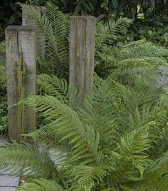 onderhoudsarme vaste planten voor je tuin: naaldvaren Lily Garden, Green Garden, Shade Garden, Garden Plants, Landscape Elements, Landscape Architecture, Part Shade Plants, Woodland Garden, Terrace Garden