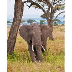 Stewart Parr 'Elephants in Keyna Watching Vertical' Photograph