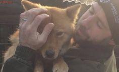Cachorra resgatada de fazenda de carne saboreia o gosto da liberdade