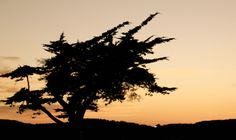 silhouettes at sunset Sunset Silhouette, Silhouettes, Amazing, Beach, Outdoor, Outdoors, The Beach, Silhouette, Beaches