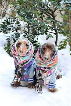 Ready To Face The Cold And Snow