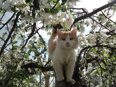 Kittie tree